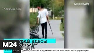Женщина с ружьем охотилась на собак в Подмосковье - Москва 24
