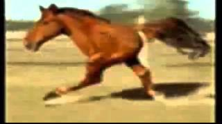 Retarded Running Horse BACKWARDS