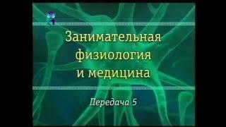 видео Основные разновидности заболеваний эндокринной системы