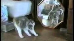 Video des Tages #2-Lustige Tiere