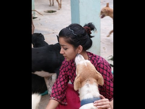 Sai ashram Animal Shelter, New Delhi -Documentary on Mudita Chandra