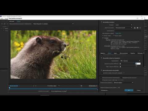 О программе Adobe Media Encoder