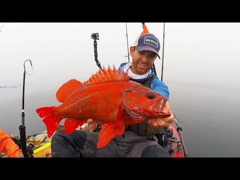 Kayak Fishing: Red Rockfish in the Fog   #FieldTrips Ep 6