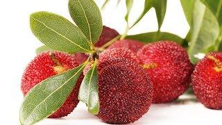 Hilft diese Pflanze bei Diabetes und hilft Sie den Blutdruck zu regulieren?