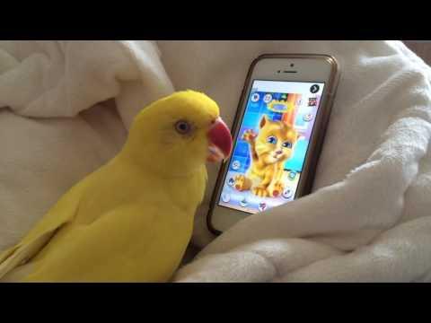 Loro entabla profunda conversación con una popular aplicación que habla