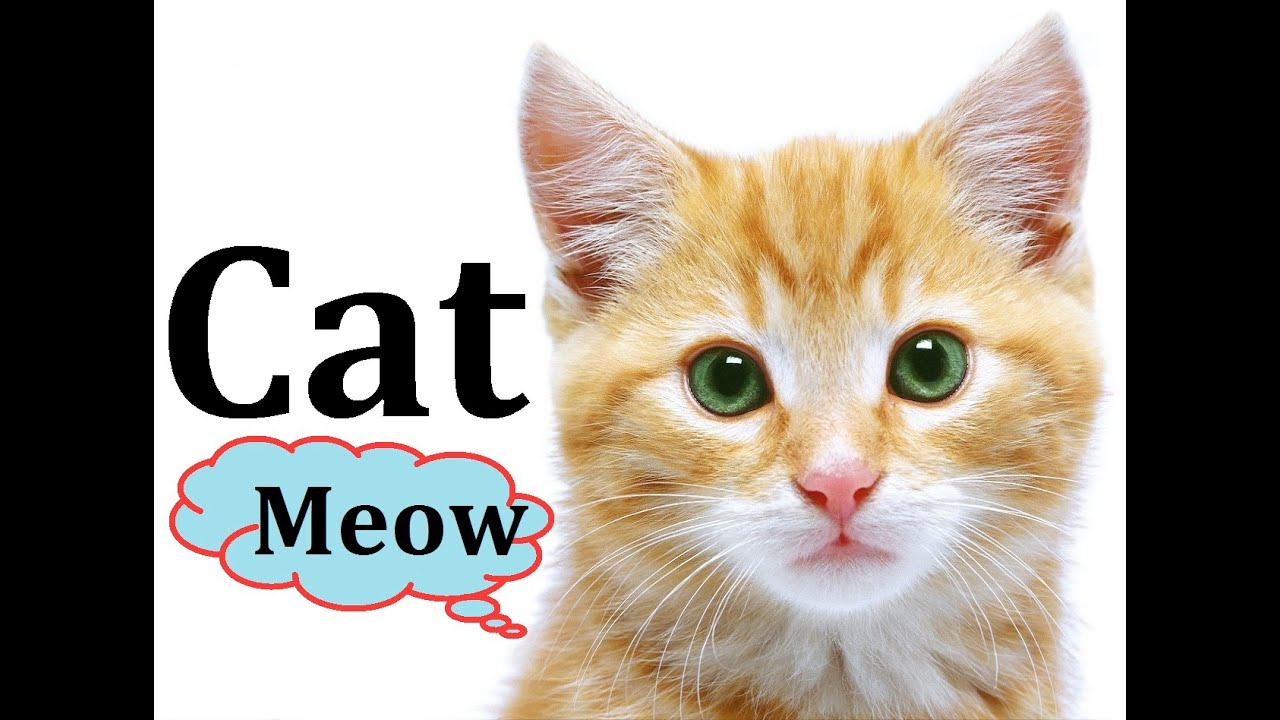 Sounds That Will Make Your Cat Meow