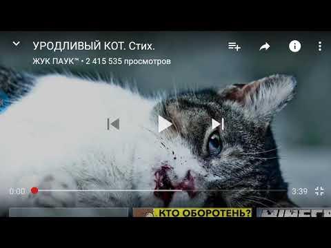 уродливый кот стих картинка большой
