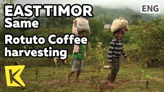 【K】EastTimor Travel-Same[동티모르 여행-사메]로뚜뚜 마을 생계수단, 커피수확/Rotuto Coffee Harvesting/Local Life/Village