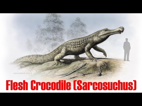 Sarcosuchus  / Flesh crocodile