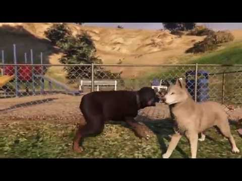 Gta  Dog Fight Ps
