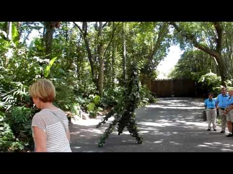 Disney World Animal Kingdom - Seeing DeVine
