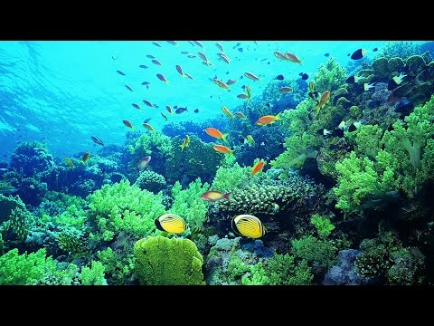 Saving corals from the effects of climate change