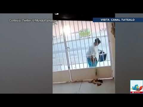Mujer tira cruelmente a 6 perritos dentro de una casa si la reconoces ¡Denúnciala!