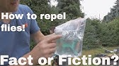 Worlds Greatest Fruit Fly Trap! - YouTube