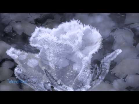 Secret Garden - Frozen in Time