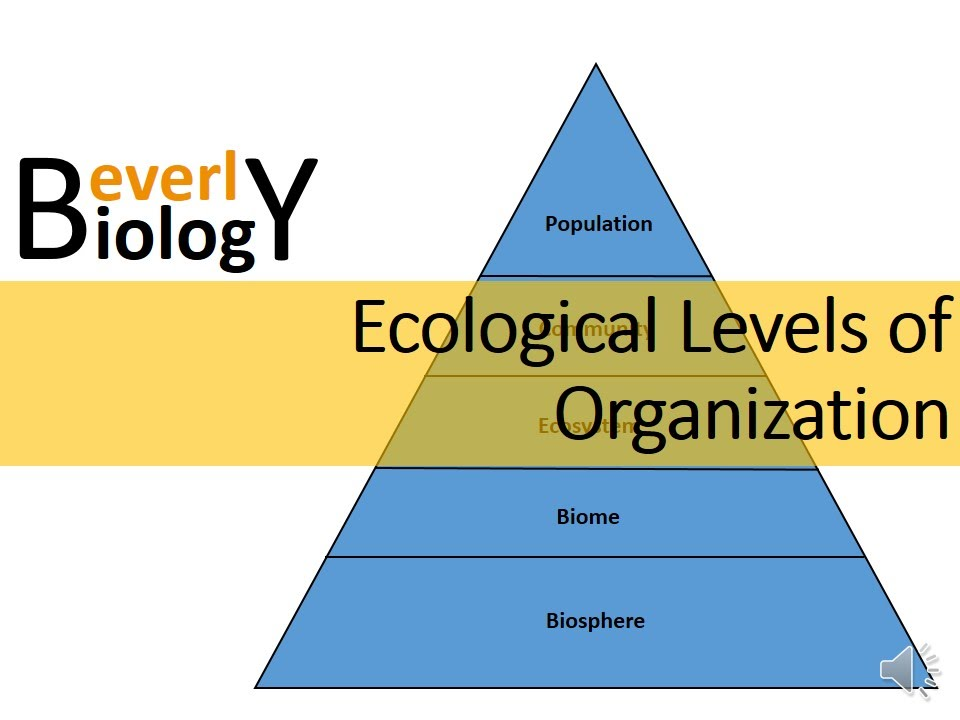 Ecological Levels of Organization - YouTube