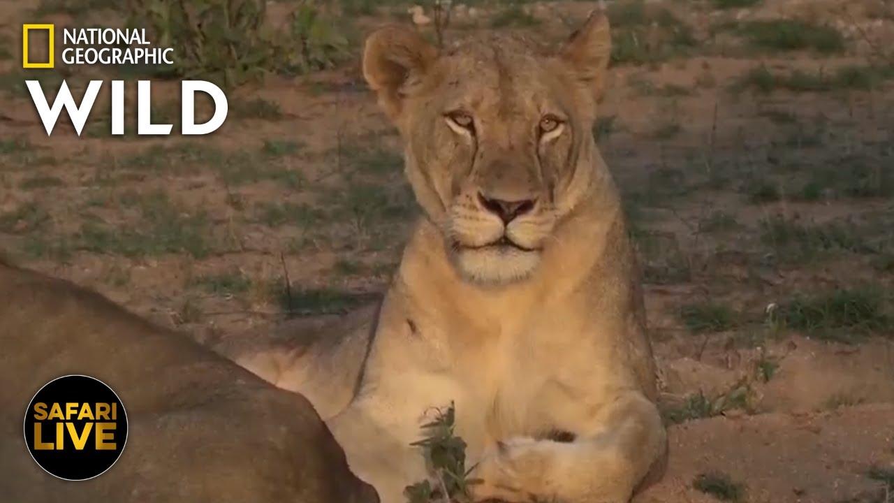 Safari Live - Day 281 | Nat Geo Wild