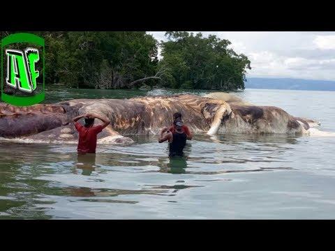 6 ყველაზე უცნაური ცხოველი დედამიწაზე (ვიდეო)