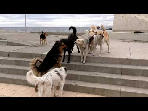 The Dogs of Punta Arenas Chile