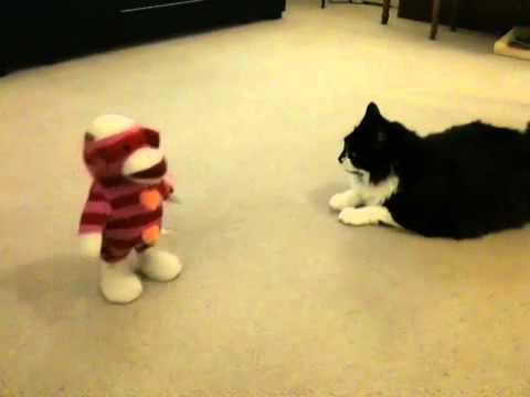 Sock Monkey Vs Giant Cat