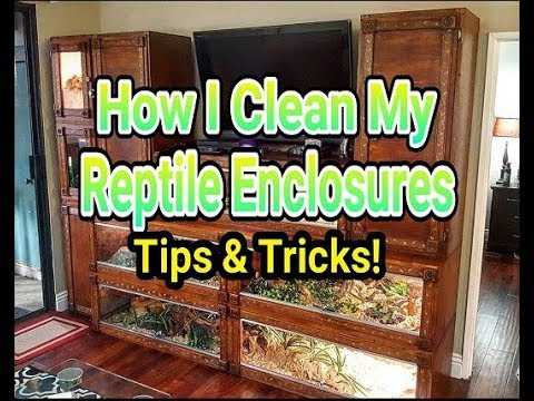 How I Clean My Reptile Enclosures (Helpful Tips & Tricks)