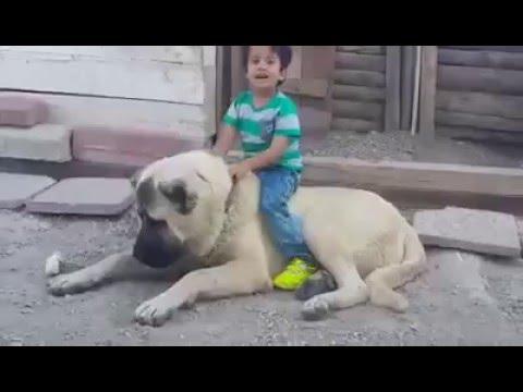 Kangal ile Çocuk Oyun oynama