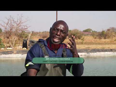 AQUACULTURE ( FISH FARMING ) IN ZAMBIA WITH DR KACHAKA \u0026 PASTOR CHILUBA