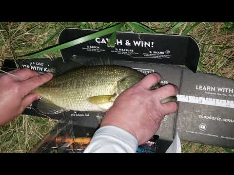 GAME CHANGER BASS For Grant McIntosh Raw Reel LyubakaVideo