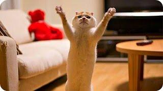 Смешные Кошки 2016! (#23) Веселая Видео Подборка! Смешные Животные 2016/