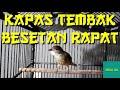 Kapas Tembak Besetan Rapat Kasar Masteran Kapas Tembak Besetan  Mp3 - Mp4 Download