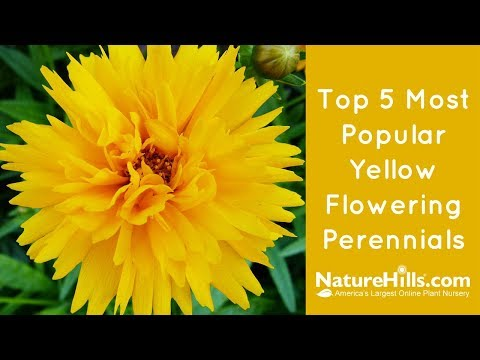 Top 5 Most Popular Yellow Flowering Perennials | NatureHills.com