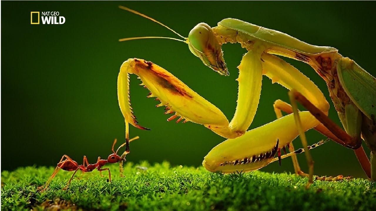 Adaptaciones de los escarabajos tigre | Ask A Biologist  |Insecta Insects