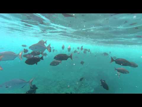 More snorkeling on #Kauai via Na Pali Coast Hanalei Tours