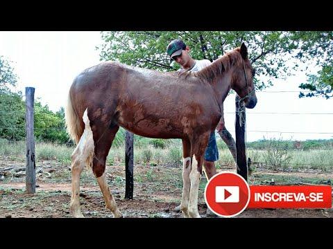 """""""Vida Na Roça"""" Dano Um Banho Nos Cavalos {CANAL DO VAQUEIRO }"""