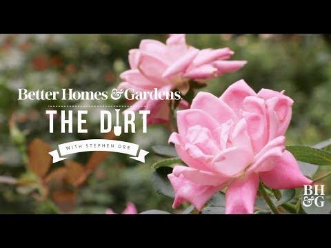 Roses The Dirt Better Homes Gardens Youtube