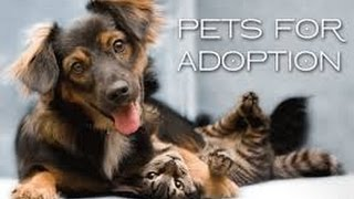 Animal Adoption: Please Adopt!!!