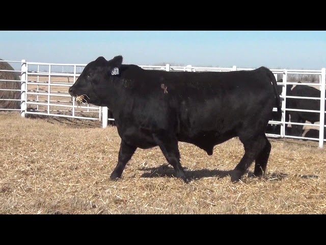 Express Ranches Lot 367