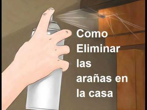 Como eliminar las ara as en tu casa youtube for Aranas en casa eliminar