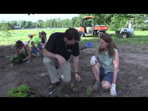 How to plant the Herbaceous Layer
