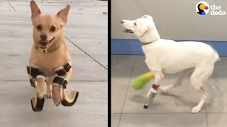 Dogs Walk For The First Time Using 3D Printing | The Dodo