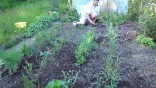 Vegetable Garden Update-raised Bed, Herbs, Runner Beans Etc