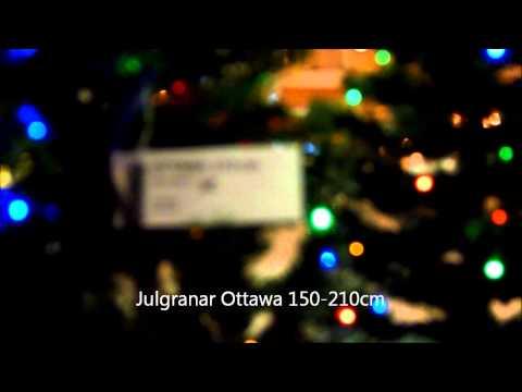 Star Trading Julgran Ottawa