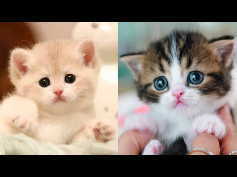 Baby Cats - Cute and Funny Cat Videos Compilation #27 | Aww Animals