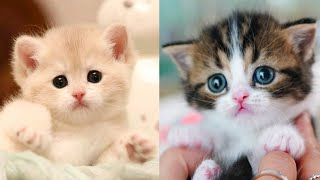 Download Baby Cats - Cute and Funny Cat Videos Compilation #27 | Aww Animals