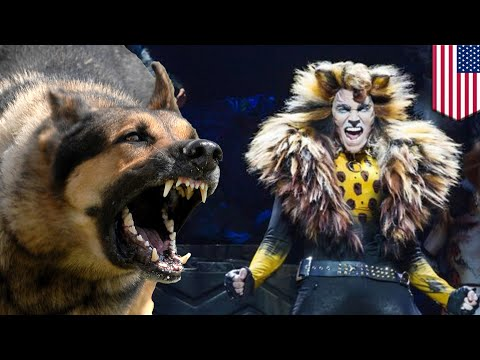 Dog vs cat: Service dog chases after actress in cat costume during 'Cats' musical - TomoNews