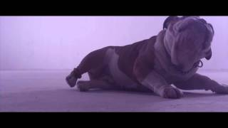 Donots - Wake The Dogs (Official Video)