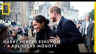 Harry herceg esküvője – a kulisszák mögött