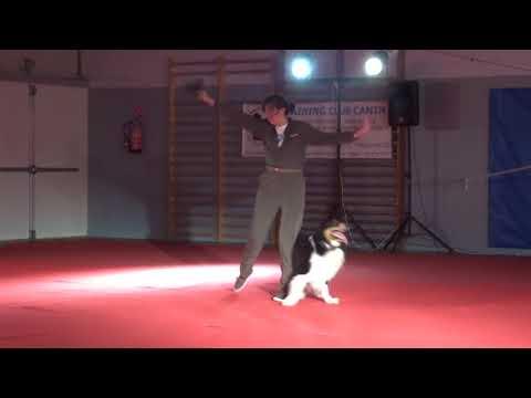 Dog Dancing Show - Villeneuve le roi novembre 2018