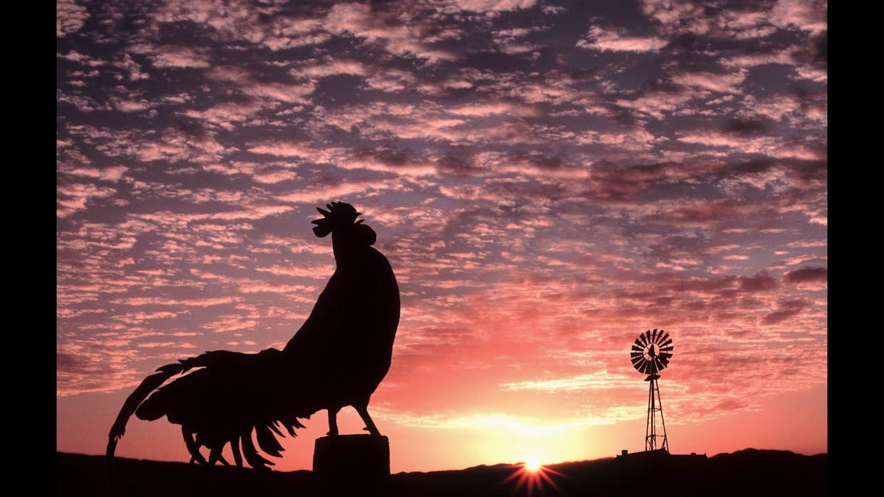 Cock Crow Sound 61