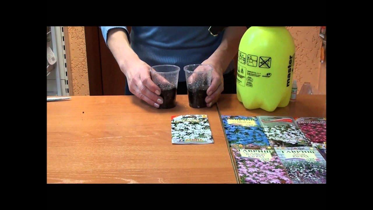 Как сделать красивый палисадник из штакетника фото